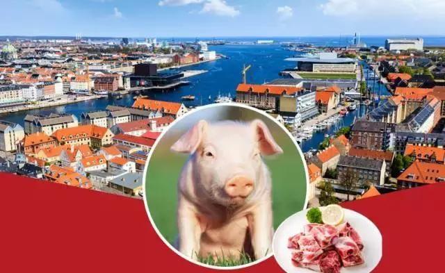 评论:为什么丹麦皇冠进军中国养猪业,我们慌了?