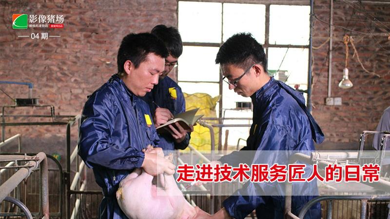 《影像猪场》第4期:走进技术服务匠人的日常