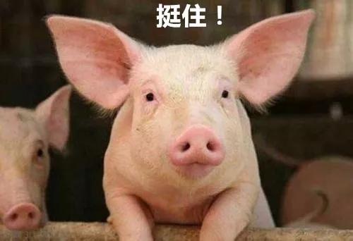 扬翔服务养猪事业部给全体养猪人的公开信