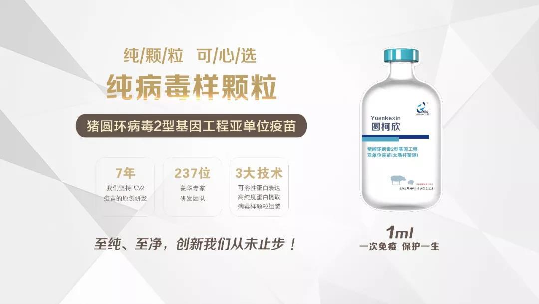 60万头份圆柯欣猪场临床应用,免疫副反应率0.0115%