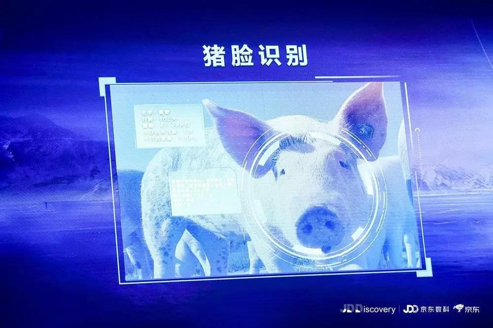 """京东提出智能养殖解决方案""""猪脸识别""""科技成热门话题"""