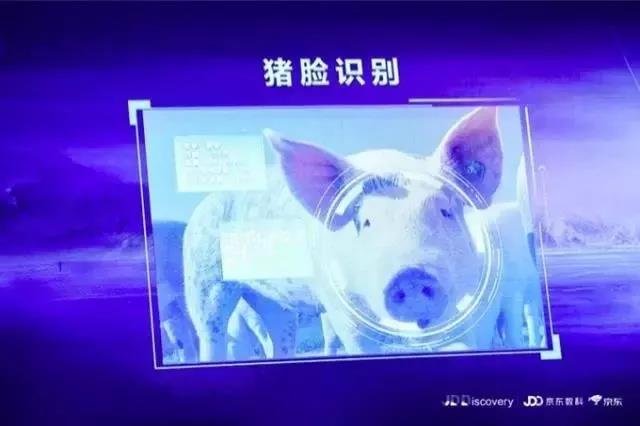 """""""京东猪""""与网易、阿里养的猪有何异同?"""