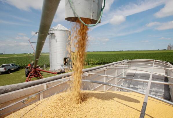 """美国大豆""""爆仓""""卖不出!中美贸易致使美国大豆出口中国降幅超95%"""
