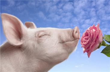 总裁观点 | 高全利:对中国养猪产业发展趋势提6个大胆判断!