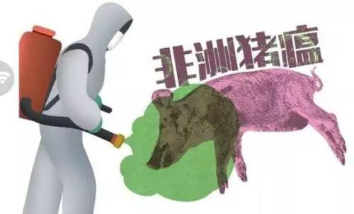 毕杰:半年多以来对非洲猪瘟学习的总结