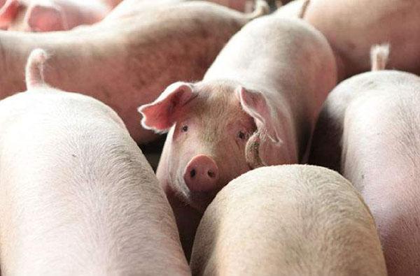 傲农生物 | 拟定增募资13.9亿元发力生猪养殖项目