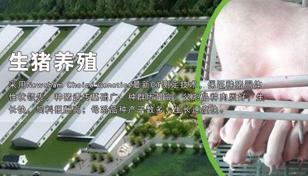 新京报:天邦股份拟建可存10万头母猪养殖基地
