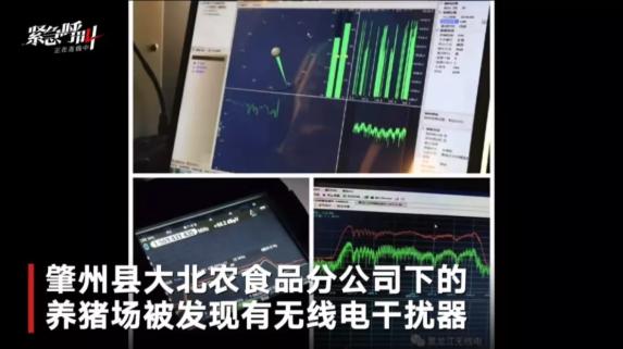 """新京报 :别让""""炒猪团""""跑了"""