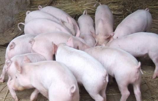 綜合報道 | 僅4月份,28家養豬企業共投資760億元布局生豬產業