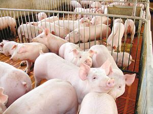 综合报道 | 最新发布!全国31省生猪存栏、猪肉产量