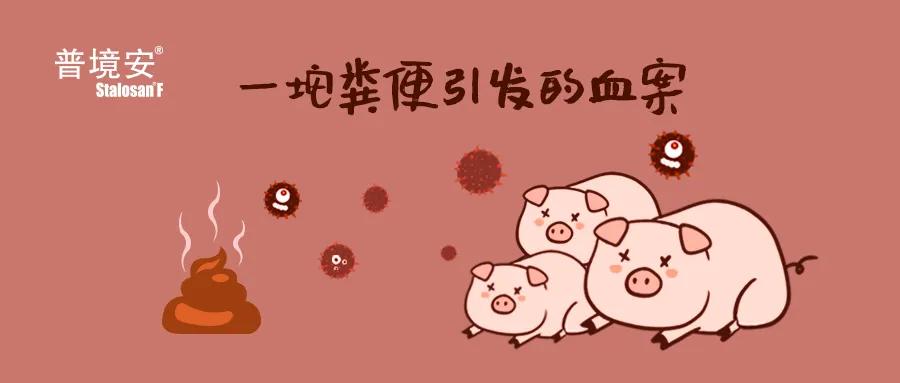 爱猪精选 | #猪便引发血案#你相信吗?