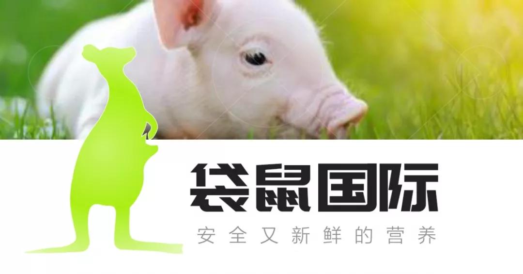 爱猪精选 | 新鲜营养、免疫健康——袋鼠国际广东行