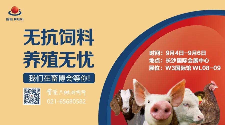 爱猪精选 | 4大亮点抢先看,我们在长沙畜博会恭候您!