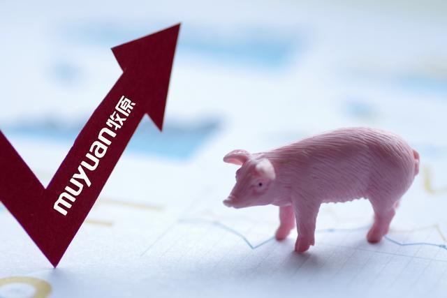 牧原股份:公司生猪养殖毛利率高于同行业上市公司是合理的