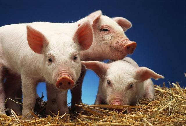 农业农村部唐仁健:要充分认识疫苗研发对我国生猪生产的重要性