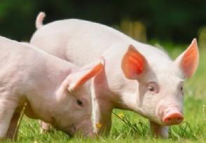综合报道丨多部委联合发布生猪产品信息及完善猪肉储备调节机制预案