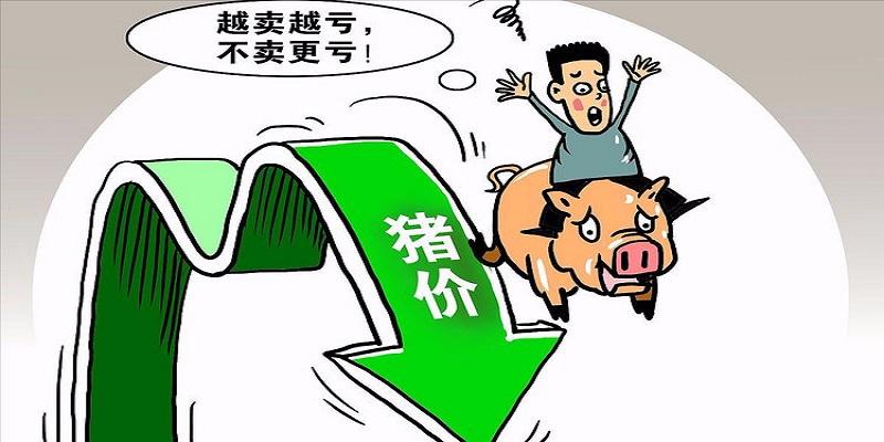 综合报道丨猪价反弹势如破竹 反弹空间仍有待观察