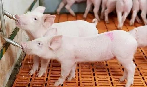 综合报道丨猪肉价格降幅扩大 CPI同比涨幅延续回落