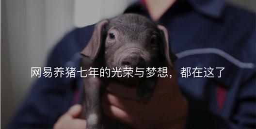 中国最有勇气的猪场!养猪众筹启动17分钟破100万人民币