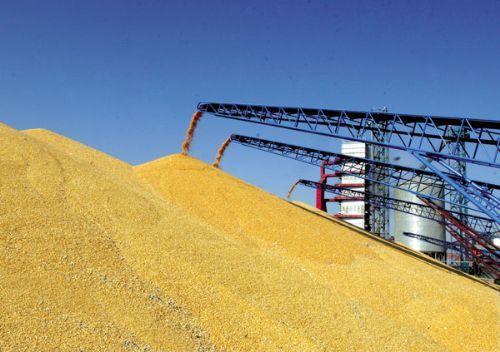玉米上涨、冻肉走私猖獗 猪价后市走势如何?