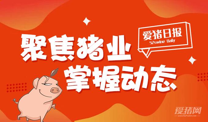 爱猪日报|安徽四天确诊3起非洲猪瘟;金新农上半年亏3628.2万