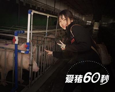 爱猪60秒