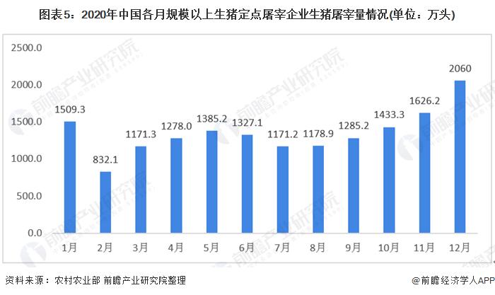 图表5:2020年中国各月规模以上生猪定点屠宰企业生猪屠宰量情况(单位:万头)